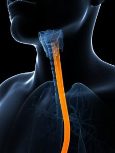 esophageal connection