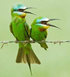 birdcourtship