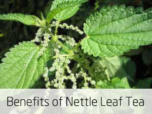 nettle leaf tea benefits