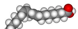 candida-caprylic-acid